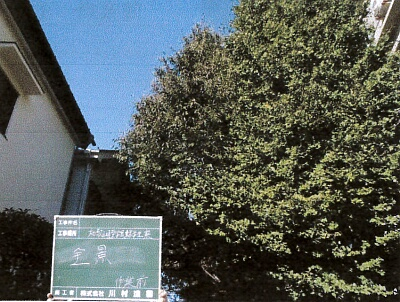 treesbefore
